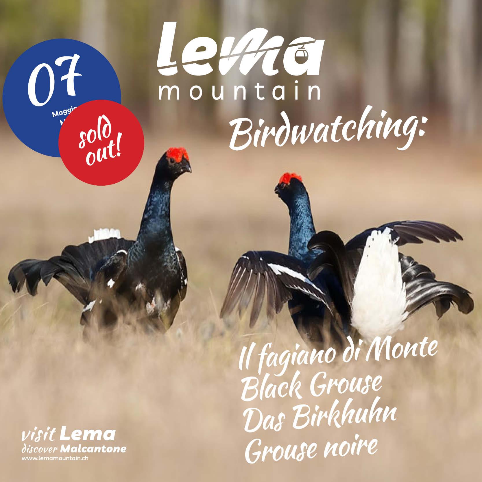 birdwatching-soldout